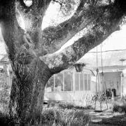 Tree Series #12