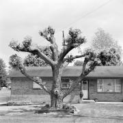 Tree Series #14