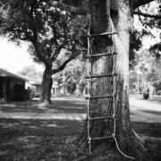 Tree Series #15