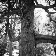 Tree Series #16
