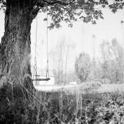 Tree Series #2