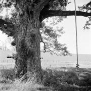 Tree Series #4