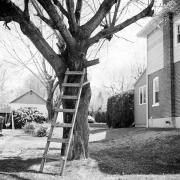 Tree Series #5