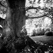 Tree Series #6