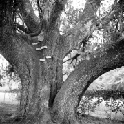 Tree Series #7