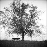 Tree Series #9